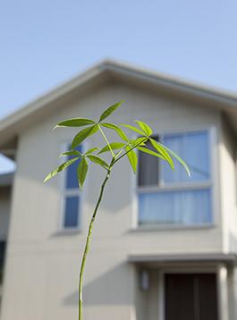 青空 建物 植物